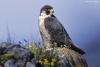 Réserve naturelle de haute montagne : Passion des animaux