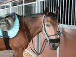 Poney Eclair - Femelle (16 ans)